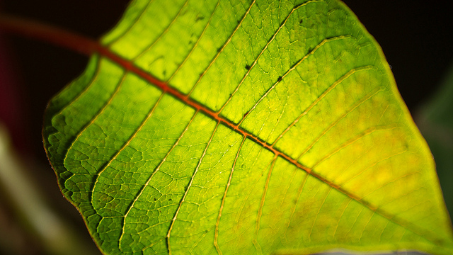 Aritificial-Leaf-Luminary